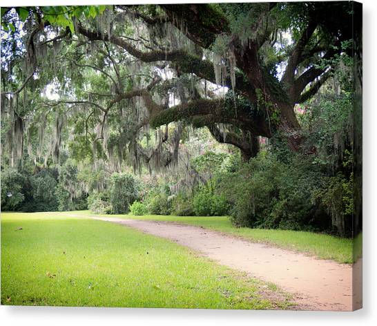 Oak Over The Trail Canvas Print