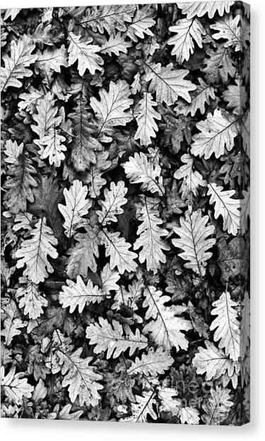 Autumn Canvas Print - Oak by Tim Gainey
