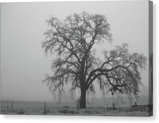 Uc Davis Canvas Print - My Beloved Gray Central Valley by Alessandra RC