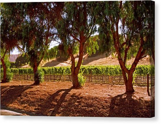 Oak Trees And Vines Canvas Print