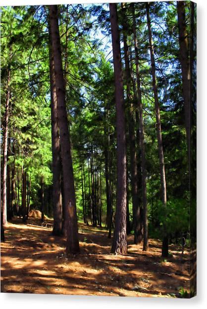 Oakrun Forest Canvas Print