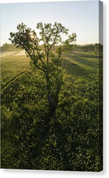 Prairie Sunrises Canvas Print - Oak Tree On Prairie At Sunrise Via Drone by Steve Gadomski
