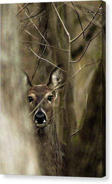 Observed  Canvas Print
