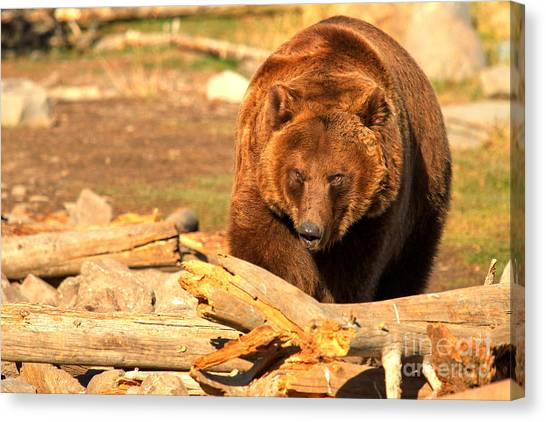 Bear Claws Canvas Print - Obstacles by Adam Jewell