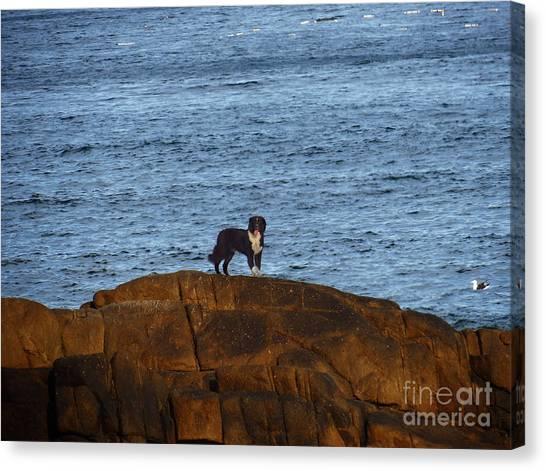 Ocean Dog Canvas Print