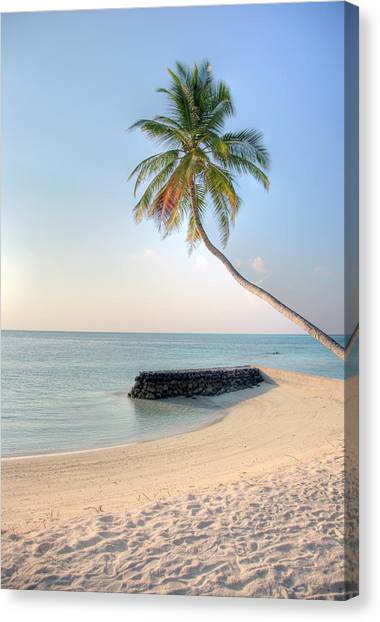 Ocean Palm Canvas Print