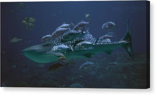 Blue Whales Canvas Print - Ocean Treasures by Betsy Knapp
