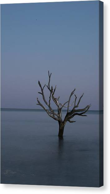 Ocean Tree Canvas Print