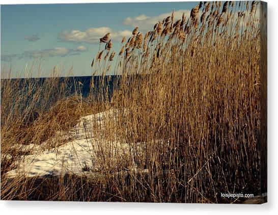 Ocean View Through The Grasses Canvas Print by Lois Lepisto