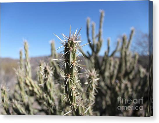Ocotillo Canvas Print