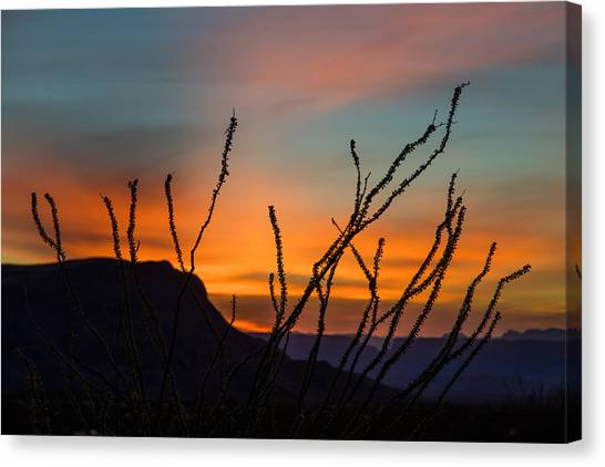 Ocotillo At Sunset Canvas Print