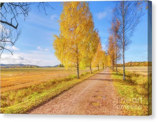 Birch Canvas Print - October Countryside 2 by Veikko Suikkanen
