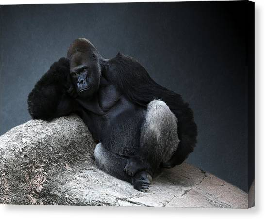 Off Duty Gorilla Canvas Print