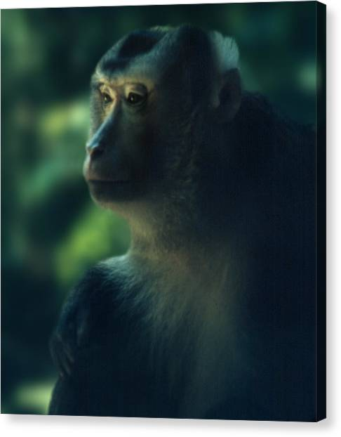 Off In Thought Canvas Print