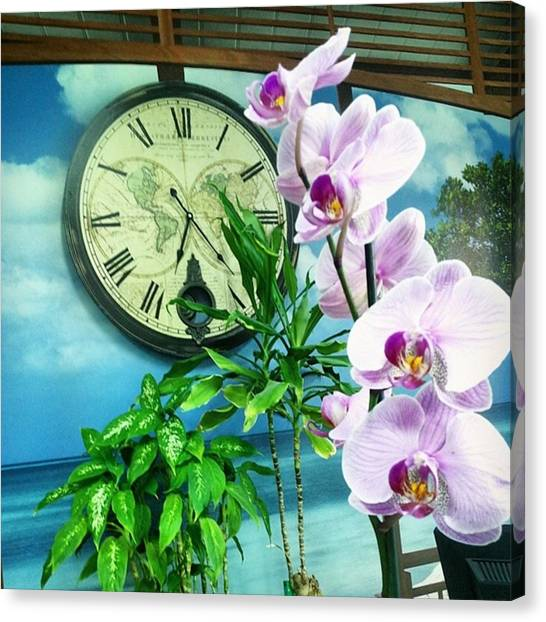 Orchids Canvas Print - Timeless Flower by Annie Nb