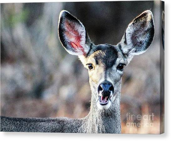 Oh, Deer Canvas Print