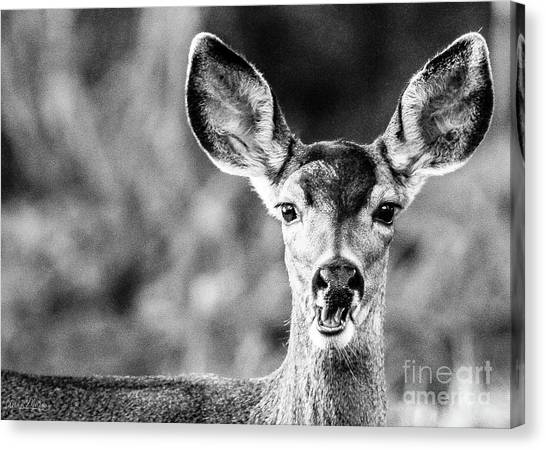 Oh, Deer, Black And White Canvas Print