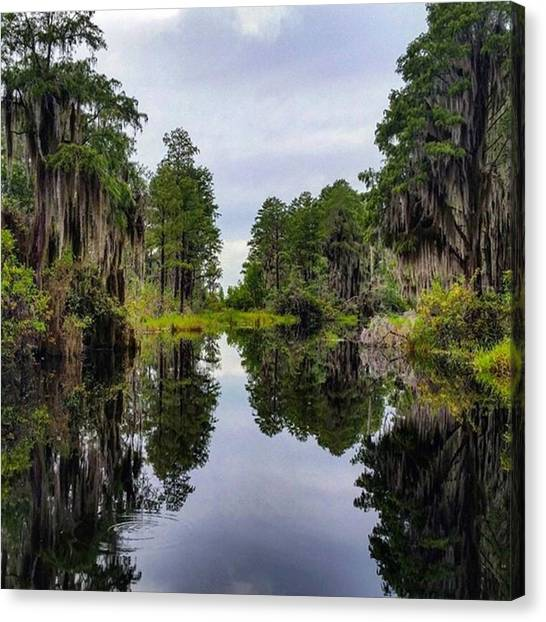 Okefenokee Canvas Print - Oh Look! I Found Another Shot On My by Karen Breeze