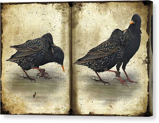 Starlings Canvas Print - Oh No You Didn't by Lois Bryan