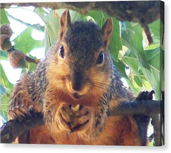 Oh Nuts Canvas Print by Linda Henriksen