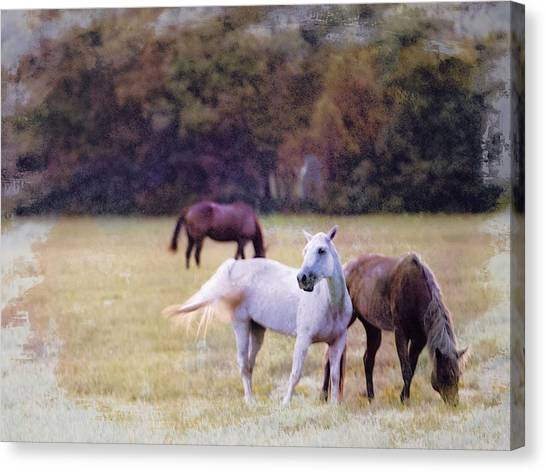 Ok Horse Ranch_1c Canvas Print