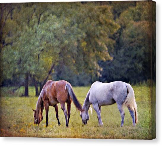 Ok Horse Ranch_2a Canvas Print