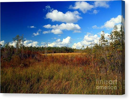 Okefenokee Canvas Print - Okefenokee Prairie by Southern Photo