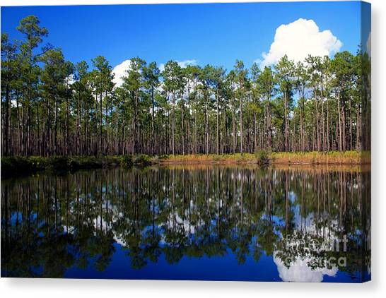 Okefenokee Canvas Print - Okefenokee Reflections by Southern Photo
