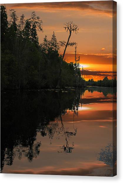 Okefenokee Canvas Print - Okefenokee Swamp by Jim Wright