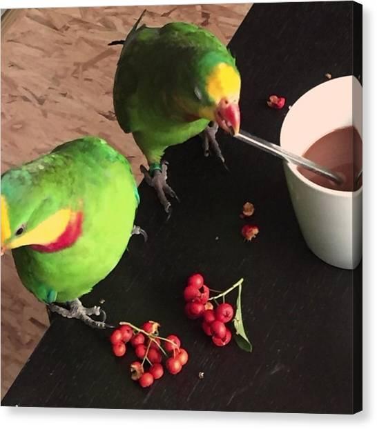 Lovebirds Canvas Print - Oktober Meine 2 Piepmatzen by Alessandro  Lo Monaco