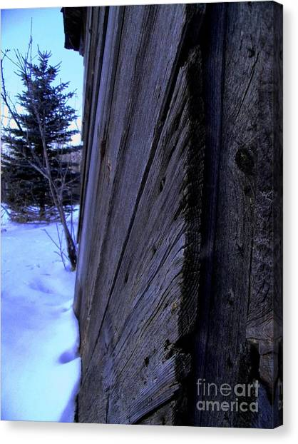 Old And Young Spruce Canvas Print by The Stone Age