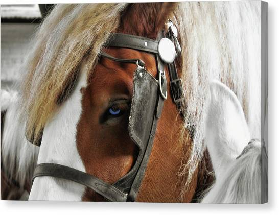 Old Blue Eyes Savannah Canvas Print by JAMART Photography