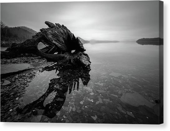 Old Driftwood Canvas Print