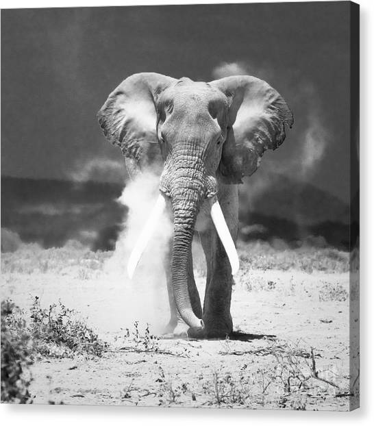 Old Elephant At Amboseli National Park Kenya Canvas Print by Konstantin Kalishko