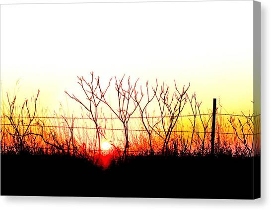 Old Fence Canvas Print