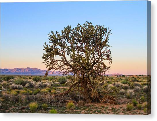 Old Growth Cholla Cactus View 2 Canvas Print