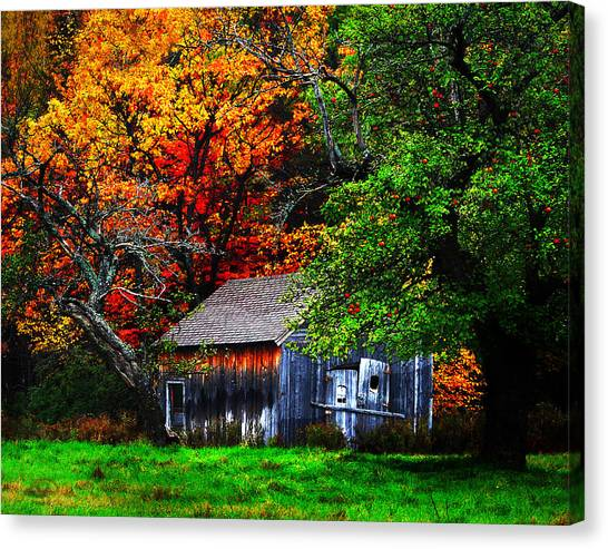 Old Homestead And The Apple Tree Canvas Print by Vicki Lea Eggen