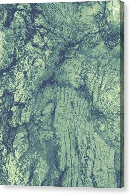 Old Man Tree Canvas Print