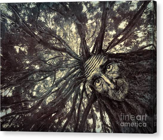 Old Man Tree Canvas Print
