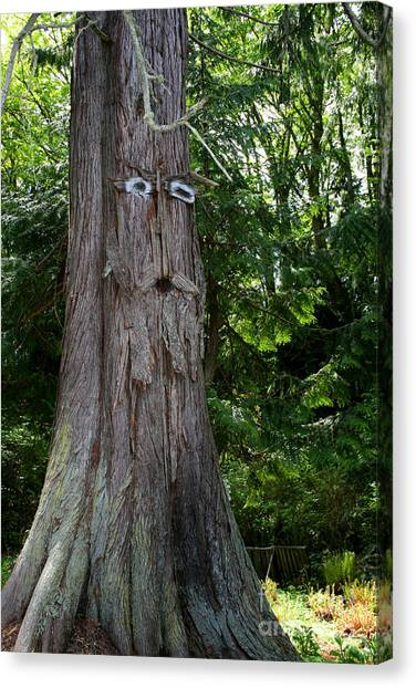 Old Man Tree Canvas Print by Robert Nankervis