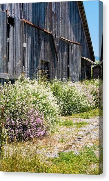 Old Milking Barn Canvas Print