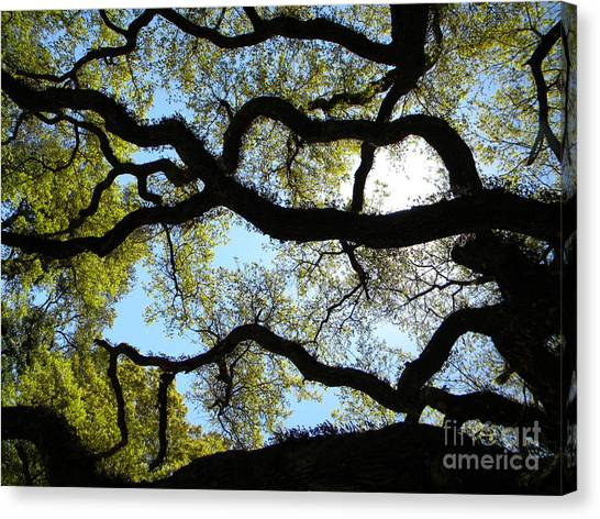 Old Oak Canvas Print by JoAnn Wheeler