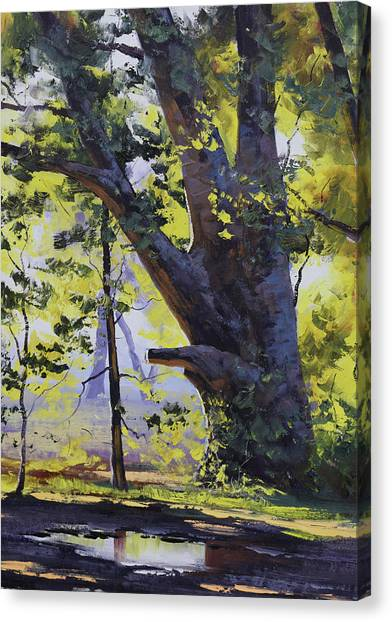 Beautiful Nature Canvas Print - Old Oak Tree by Graham Gercken