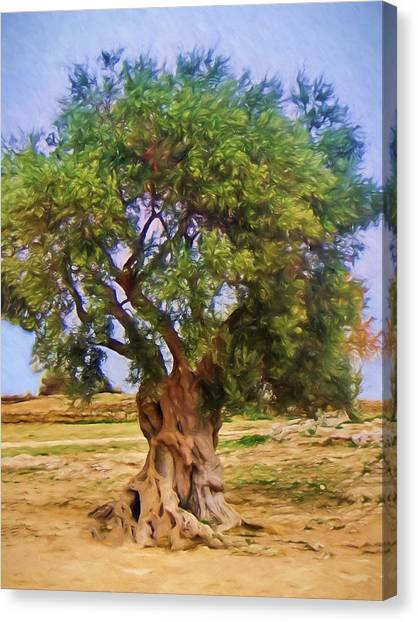Canvas Print - Old Olive Tree by Impressionist Art