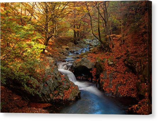 Old River Canvas Print