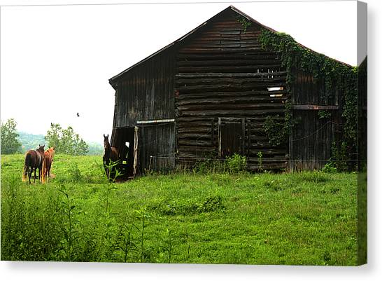 Old Stable And Horses Canvas Print