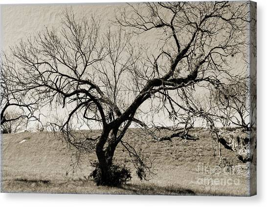 Old Texas Frontier  Canvas Print