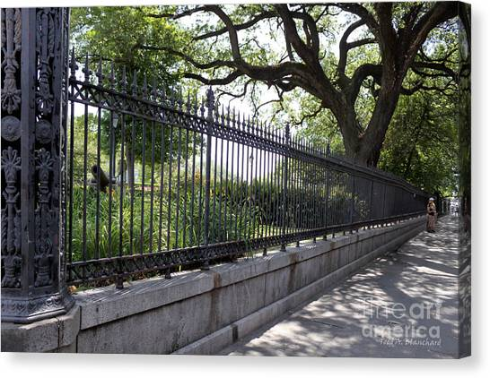 Old Tree And Ornate Fence Canvas Print