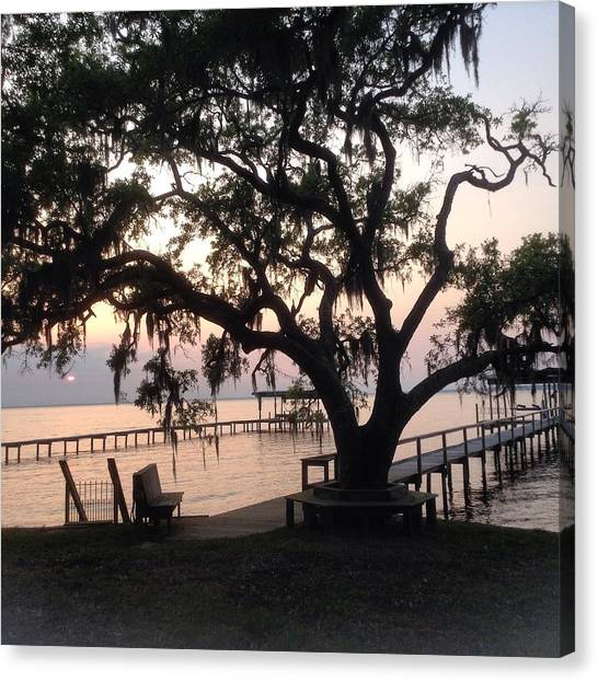 Old Tree At The Dock Canvas Print