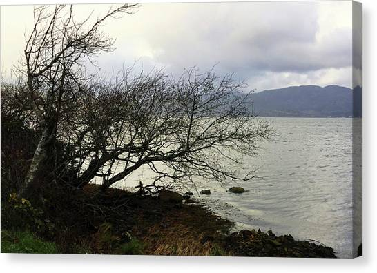 Canvas Print featuring the photograph Old Tree By The Bay by Chriss Pagani